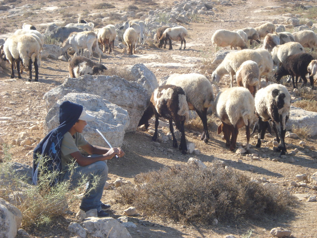 Image of Palestinian boy tending to his family's sheep